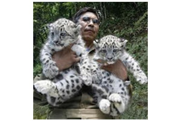 Can GPS Help Save India's Endangered Snow Leopards?